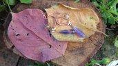 <3 Pendenti Dea della fiamma violetta <3