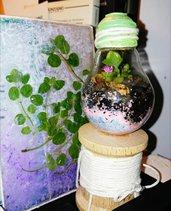 Il Micro Habitat delle piante grasse