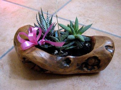 fioriera in legno di ulivo per piante grasse scolpita a mano