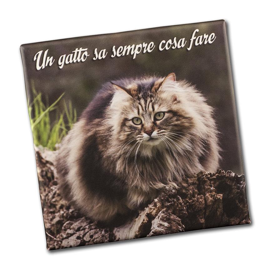 STAMPA SU TELA ALTA QUALITÀ - fotoquadro - STAMPA ARREDO - Un gatto sa sempre cosa fare - TELA 20 X 20