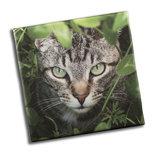 STAMPA SU TELA ALTA QUALITÀ - fotoquadro - STAMPA ARREDO - Gatto tigrato fra l'erba - TELA 20 X 20