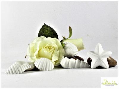 Conchiglie in gesso ceramico profumato. tema mare - pezzi 10