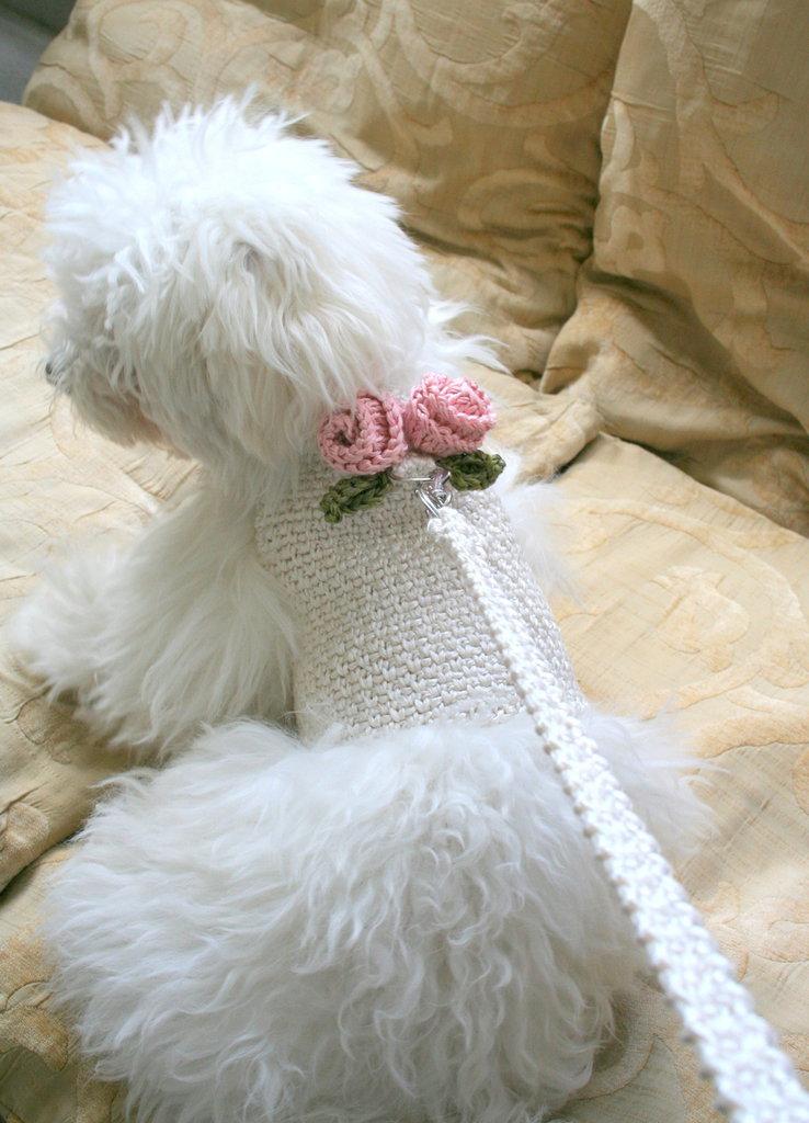 BubaDog Pettorina per piccoli cani colore bianco avorio