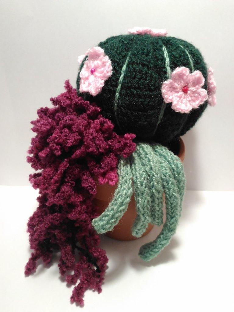 Piante grasse cactus uncinetto amigurumi in lana composizione