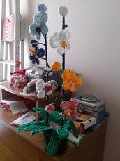 *Orchidea in Vaso*