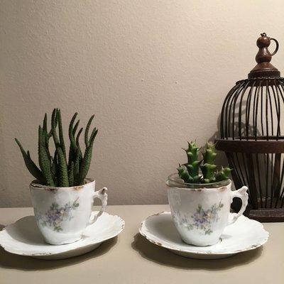 ANTICHE TAZZINE CAFFE'