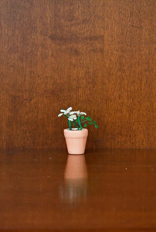 mini bonsai azzurro