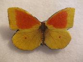 SPILLA IN PELLE farfalla