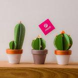 Cactus carta - Set da 3 piantine