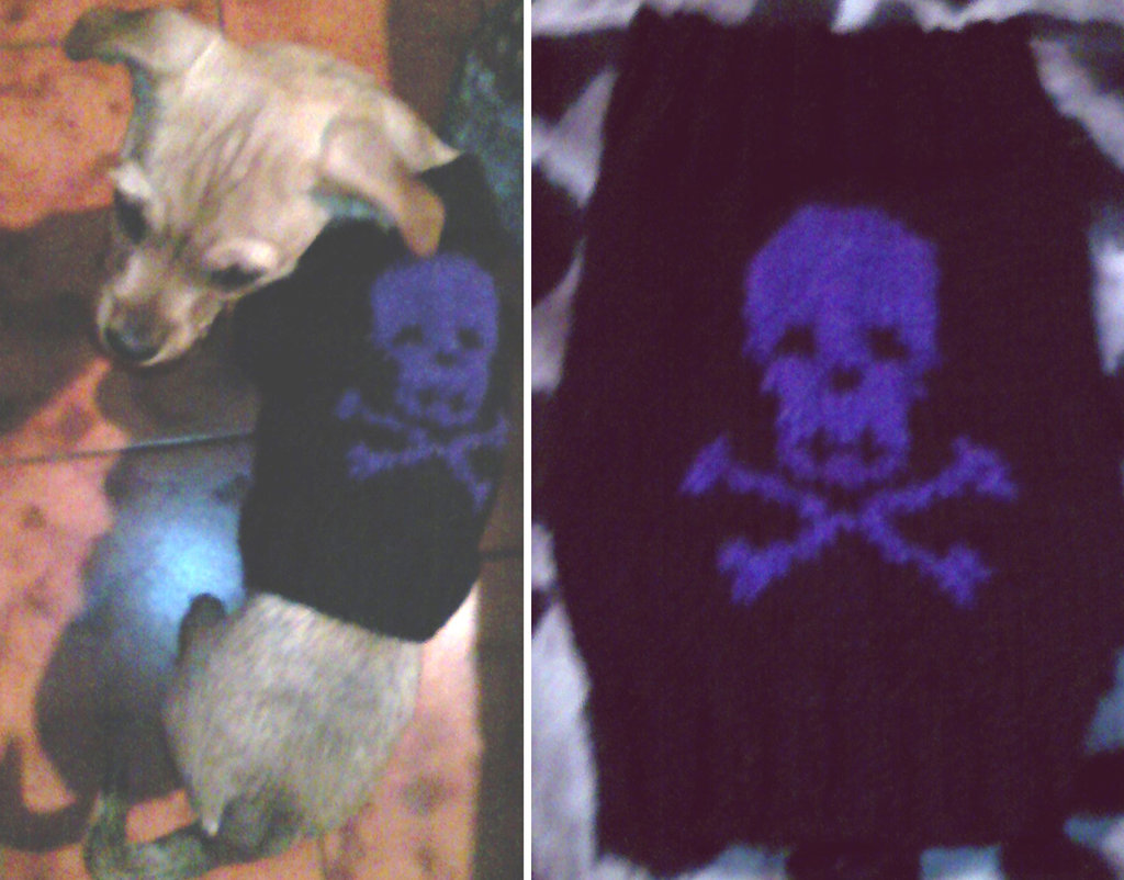 Cappottino per cani Goth