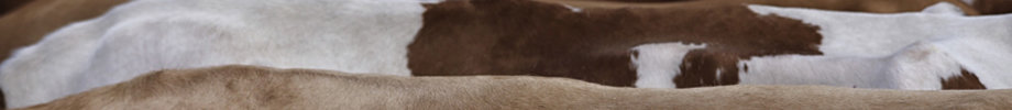 Store_banner_12658_normal