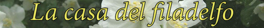 Store_banner_16149_normal